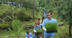 reforestacion-starbucks-coffee-parque-nacional-cumbres-del-ajusco
